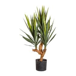 YUCCA *3 BRANCHES 105CM